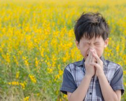 Heuschnupfen und andere Allergien